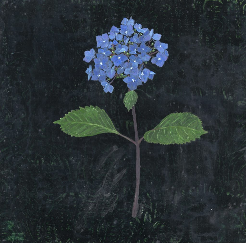 bright-blue-hydrangea