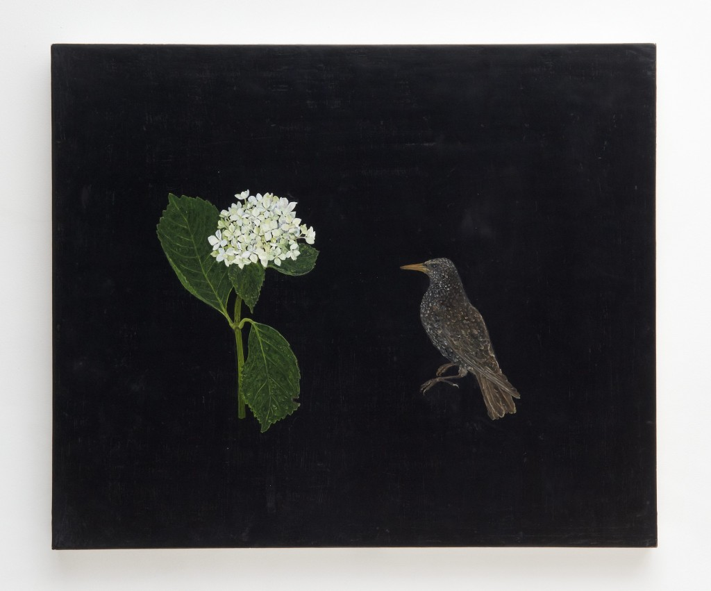 Starling Hydrangea
